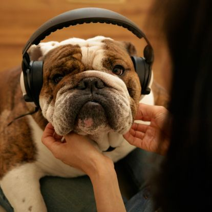 Spotify just launched a special pet playlist and a podcast for dogs