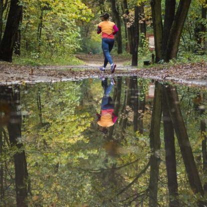 Emberre is veszélyes orvvadász-csapdát találtak az újpesti Farkas-erdőben