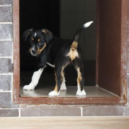 Váltságdíjért kerülnek elő a eltűnt kutyák Sepsiszentgyörgyön