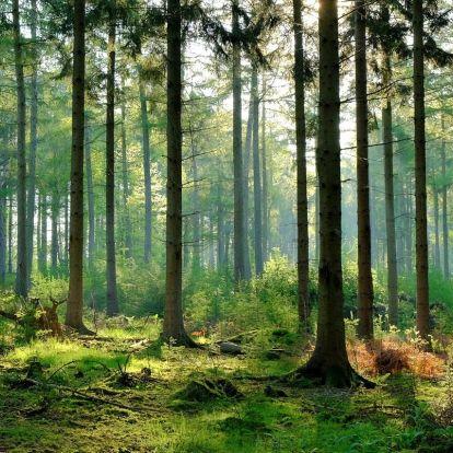 Egy billió fa: jó ötlet vagy csak figyelem elterelés?
