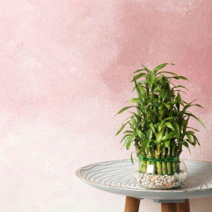 Ezek a mágikus szobanövények gazdagságot hoznak az életedbe