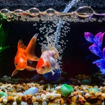 Akvárium és haltartás a lakásban: így gondozzuk!
