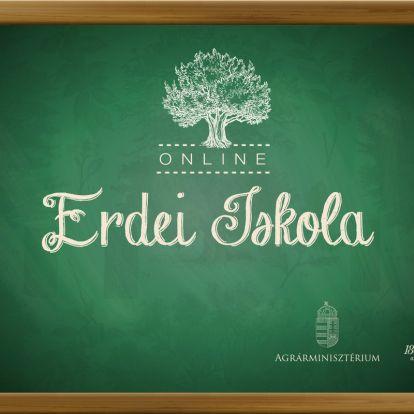 Otthonról az erdőbe! – erdei iskola otthonodban!