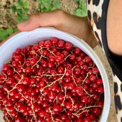 Bódi Sylvi gyümölcsszüretről készült képei férfimagazinban is elférnének