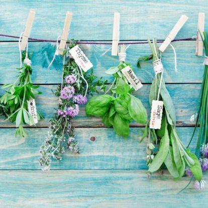 Ezek a gyógynövények a legjobb orvosságok