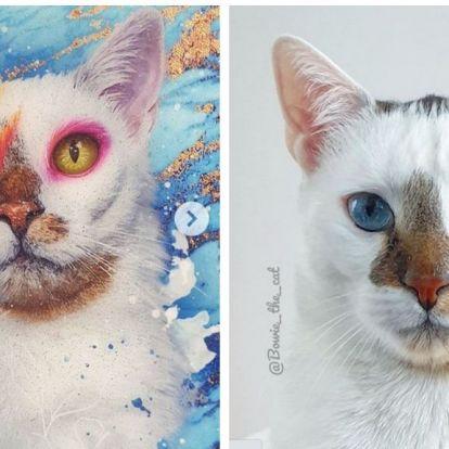 Az egész internet ezt a macskát imádja, mutatjuk, miért