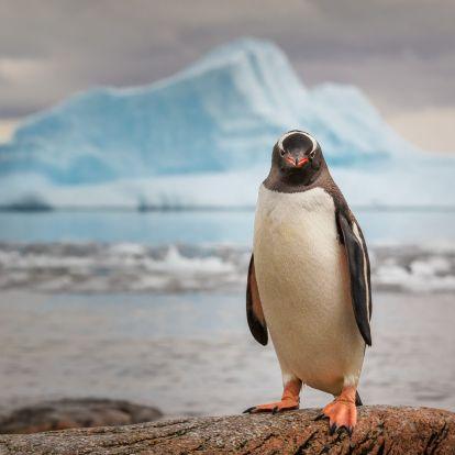 Űrből is látható pingvinürülék alapján tettek izgalmas felfedezést brit kutatók