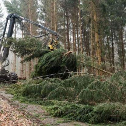 Lombkoronájuk egyhatodát elveszítették az európai erdők