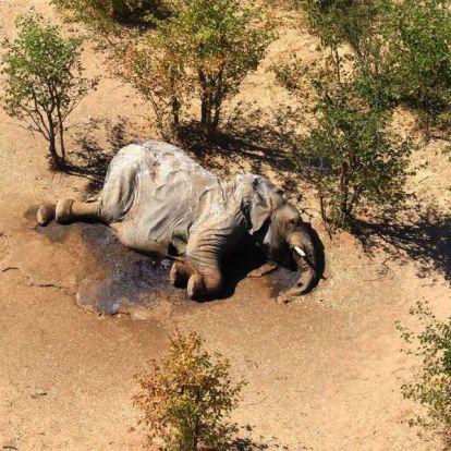 Kiderült, mitől pusztultak az elefántok Botswanában