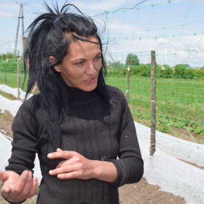Közmunka helyett inkább uborkát termesztenek a mélyszegénységben élő családok