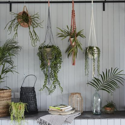 6 houseplants with mood-boosting superpowers to help you beat the winter blues