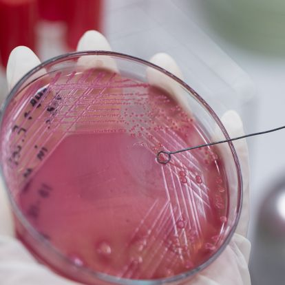 Global leaders advocate urgent action on antimicrobial resistance