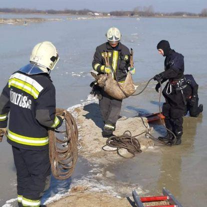 Őzet is mentettek a megyei tűzoltók