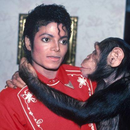 Michael Jackson csimpánza, Bubbles nem szereti, ha fotózzák