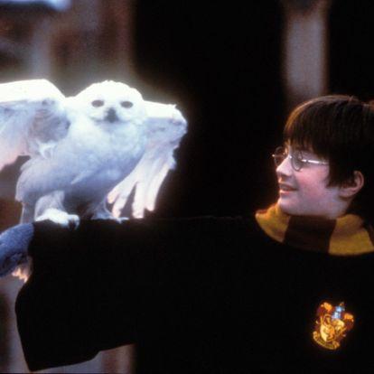 Hét tény, amit csak kevesen tudnak a Harry Potter-univerzumról