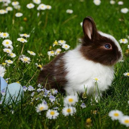 Nyusziskodás – nem csak Húsvétkor
