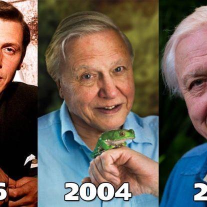 Ma 95 éves David Attenborough. Boldog szülinapot!