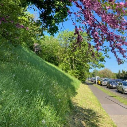 Vadvirágos városi rétek nőnek Budapesten, de nem a kertészek lustasága miatt