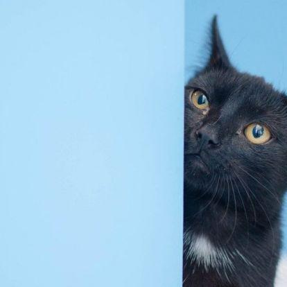 Egyik életét biztosan elhasználta az égő házból kiugró macska – videó