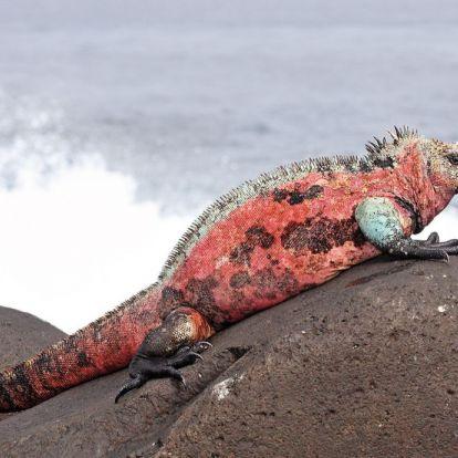 Leonardo DiCaprio stadionnyi pénzt ad a Galápagos-szigetek természeti helyreállítására