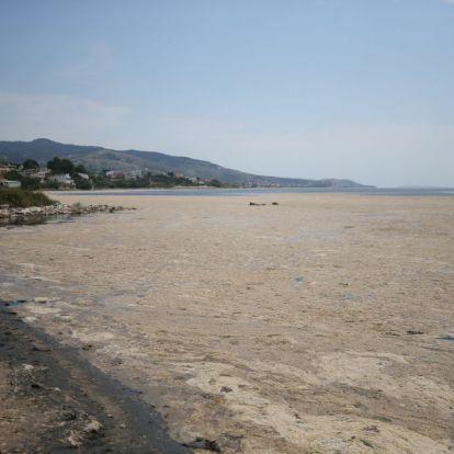 Undorító nyálka lepte be a török tengerpartot