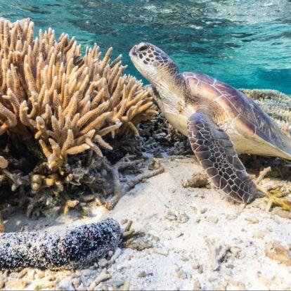 Egyelőre nem lett veszélyeztetett világörökségi helyszín a Nagy-korallzátony