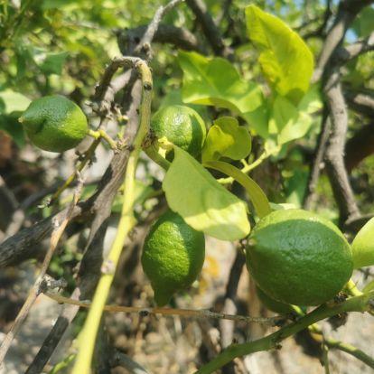 Így lett a miénk a közel kétszáz éves kunyhó, aminek egykor az ára egy kanna olívaolaj, és két vekni kenyér volt