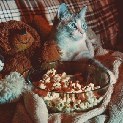 Izgalmas filmek, ha bekuckóznál ma este