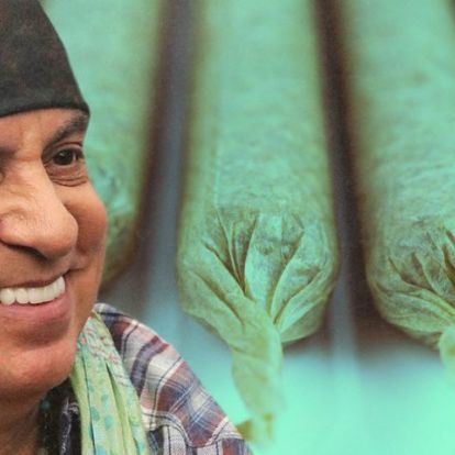 Steven Van Zandt Launches Cannabis Pre-Roll Line