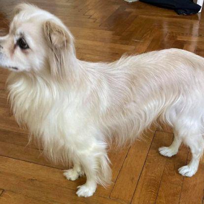 Szőrös nyúlfül és sárga szalag: örökbe fogadtunk egy kutyát