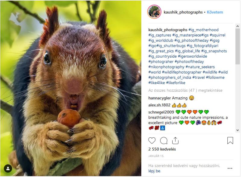 mókusok látványa