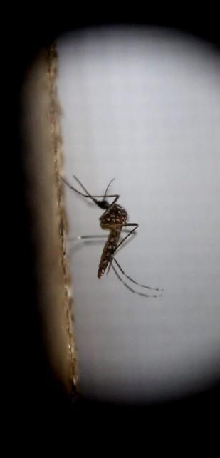 Minden a Zika-vírusról